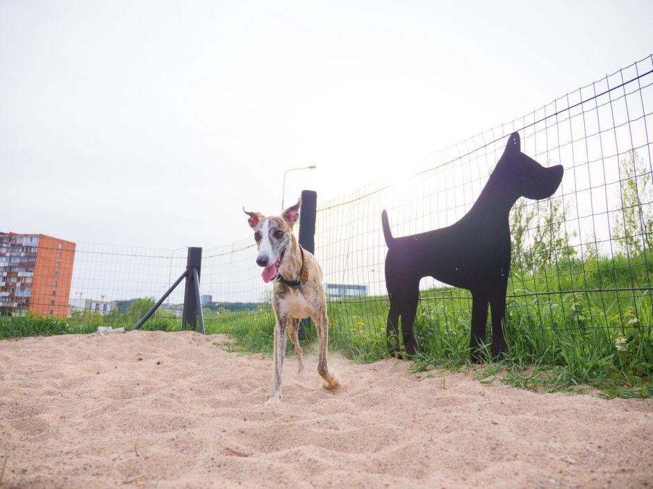 Dovana Vilniui – apšviesta šunų vedžiojimo aikštelė