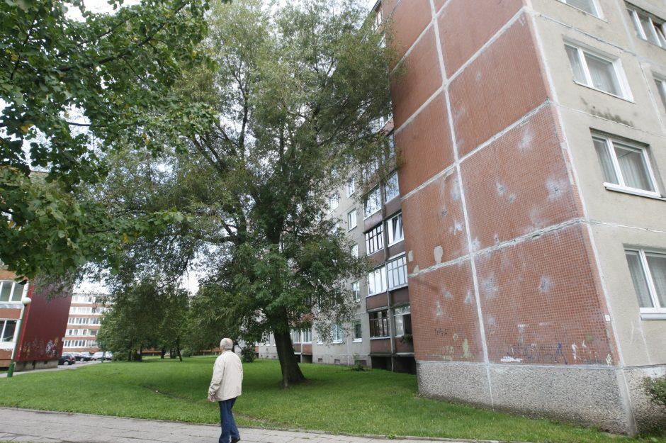 Medis apkartino klaipėdiečių gyvenimą