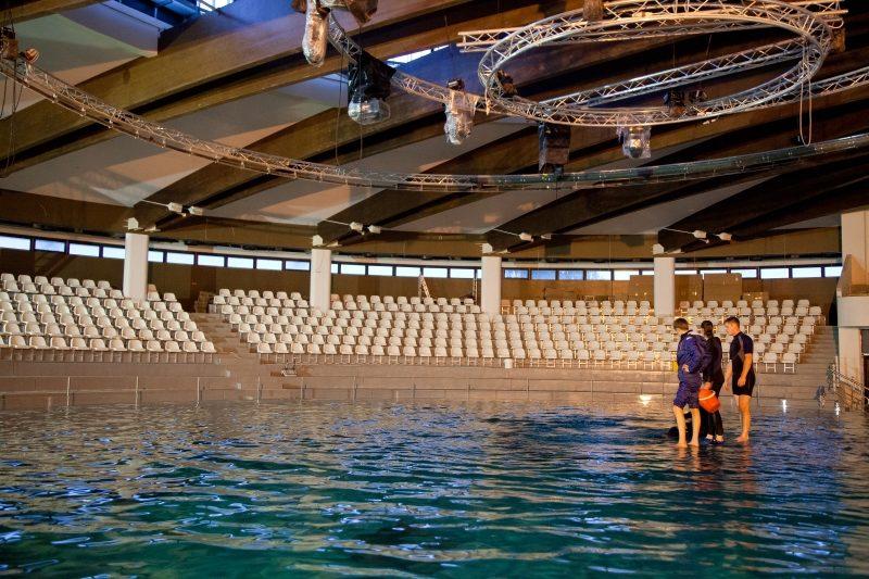 Į Klaipėdą sugrįžusios delfinės treneriams jau rodo triukus