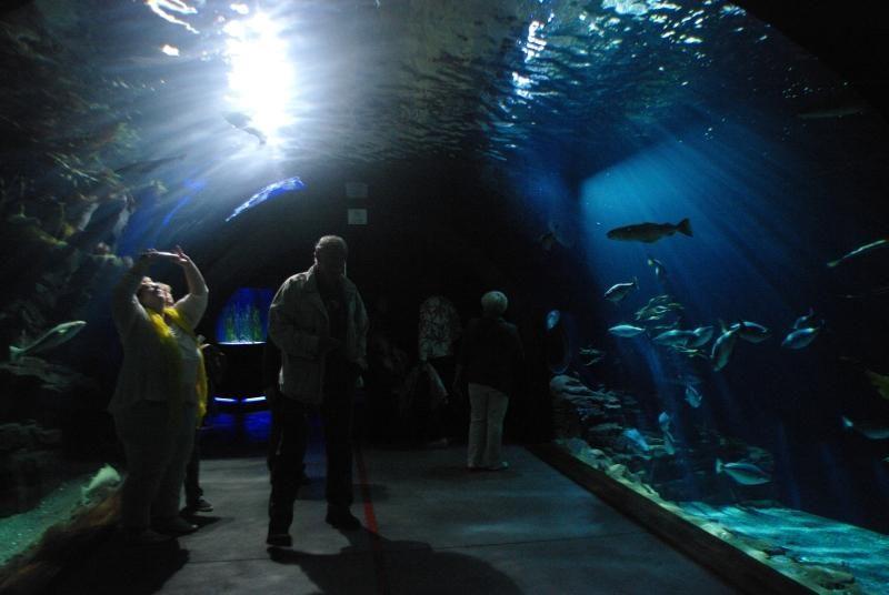 Štralzundą ir Klaipėdą jungia jūrų muziejai