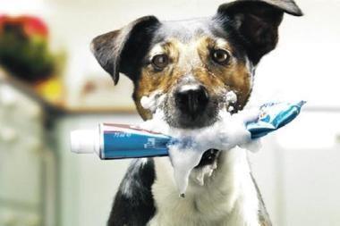 Kiek kainuoja šuns draugystė?
