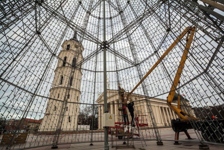 Šiųmetės eglės sostinės Katedros aikštėje aukštis sieks 25 metrus