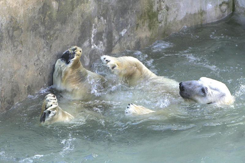 Dėl Zoologijos sode nugaišusių gyvūnų aktyvistai prašo tyrimo