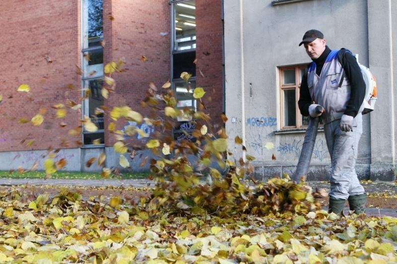 Palangos komunalininkai pelnosi iš sutrešusių lapų