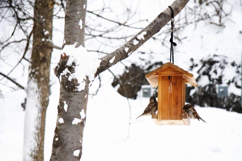 5 taisyklės, kaip lesinti paukščius žiemą