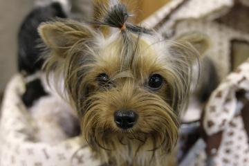 Šunų grožio salonai - nauja mada ir naujas verslas