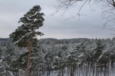 Žiema iš Lietuvos dar nesitrauks