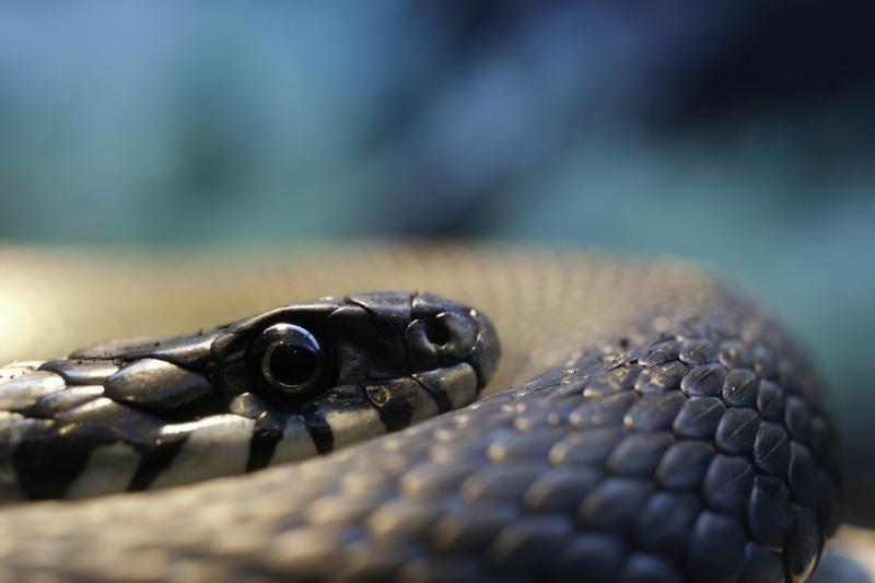 Motinos drąsa: moteris nepabūgo vaikelį apsivijusios gyvatės