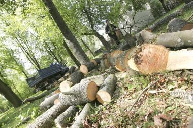 Žada atsodinti dalį medžių ir atsisakyti betoninių krantinių