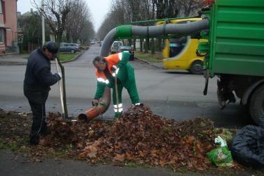 Tvarkdariai nespėja išvežti nukritusių lapų