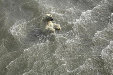 Tirpsta Arkties jūros ledas