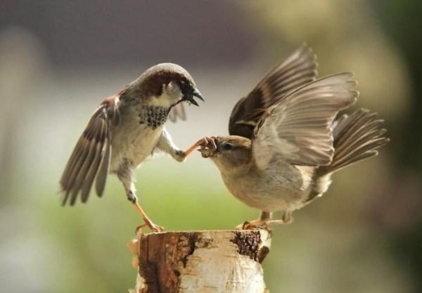 Paukščiai - ne tik Velykų pranašai (ką gi jie reiškia žmogui?)