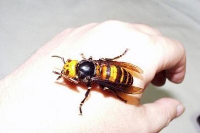 Žmones atakuoja vabzdžiai