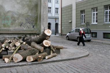 Klaipėdiečiai nesutaria dėl šalinamų medžių
