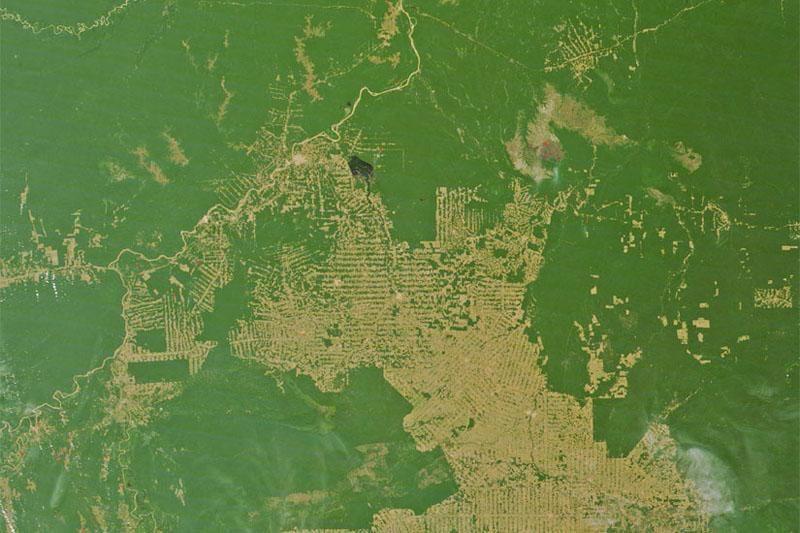 """""""Google Street View"""" jau galima keliauti Amazone"""