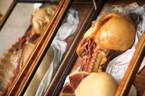 Be kurių organų galėtumėme išgyventi?