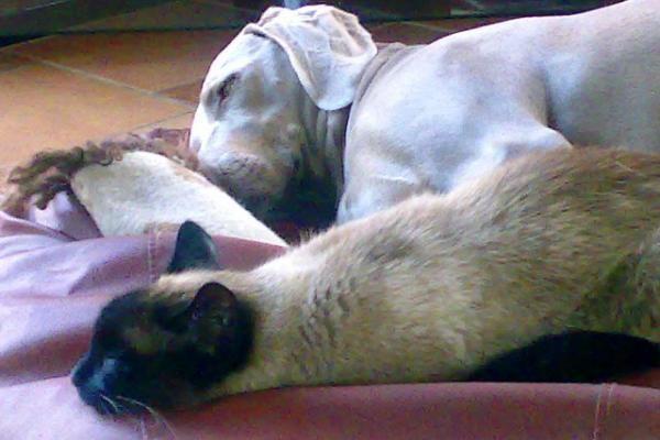 Seimo prašoma sugriežtinti bausmes gyvūnų kankintojams