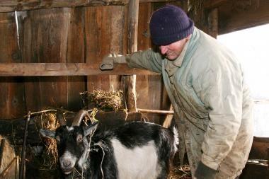 Gyvūnų ir žmonių susirgimai Q  karštine Europoje kelia nerimą