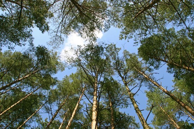 Varėnos rajone virstantis medis užmušė vyrą