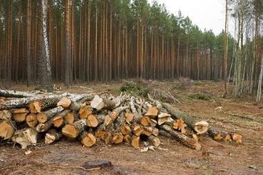 Nubausta daugiau nei 200 miško darkytojų