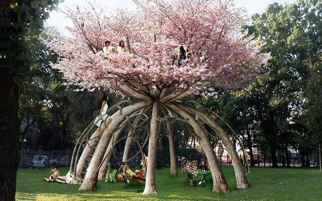 Kokius medžius sodinti sodyboje? Sodo medžiai
