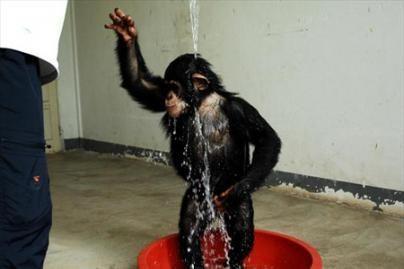 Nuo karščio gyvūnus gelbsti šaltas dušas (nuotr.)