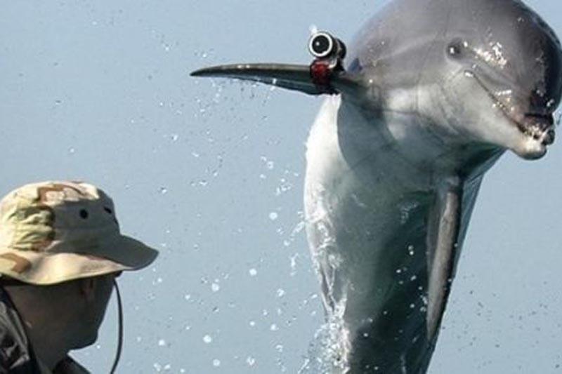 Norėdami dominuoti delfinai naudoja seksualinę prievartą