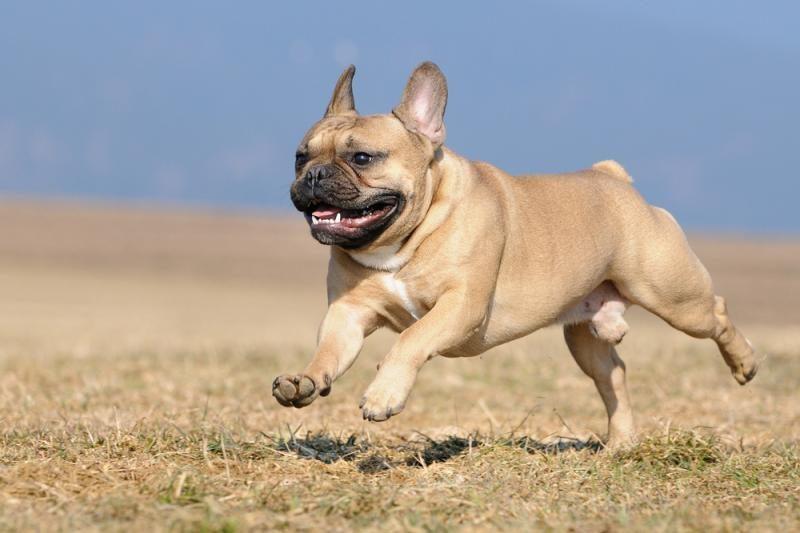 Taivanas šunų išmatas kvies iškeisti į auksą