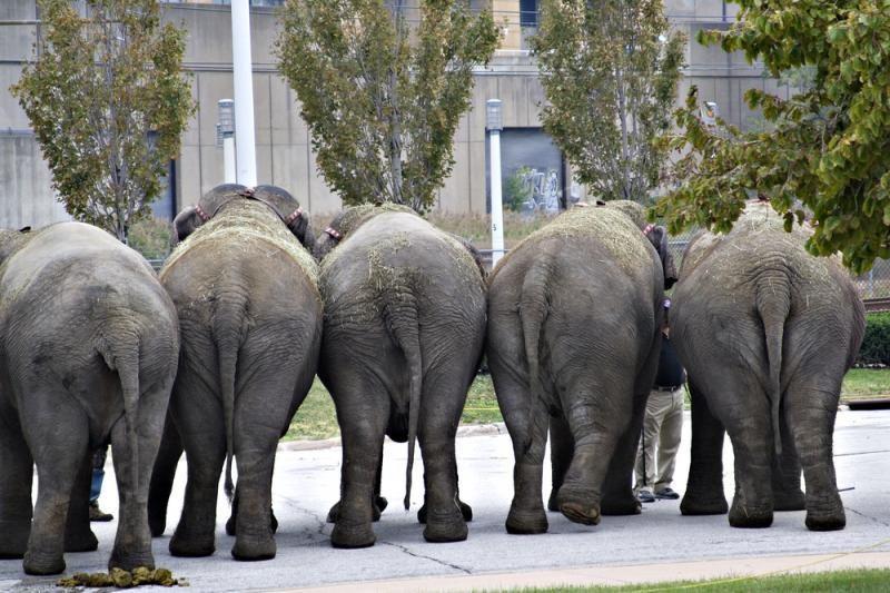 Indas atvirukus gamina iš dramblių išmatų
