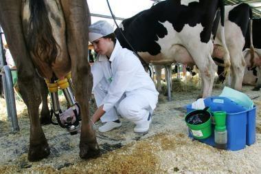 KT privalės peržiūrėti karteliu įtartų pienininkų veiksmus