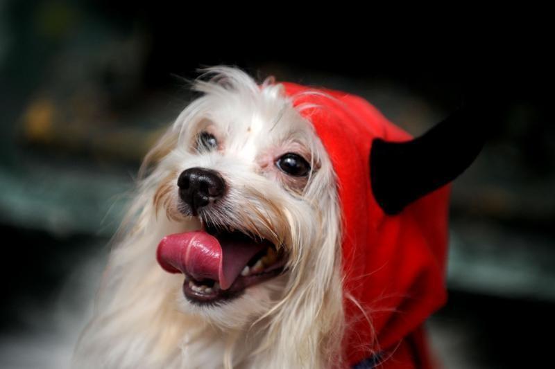 """Šunys nesušąla letenų dėl """"centrinio šildymo"""" sistemos"""