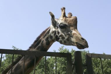 Zoologijos sodas kviečia kauniečius į talką