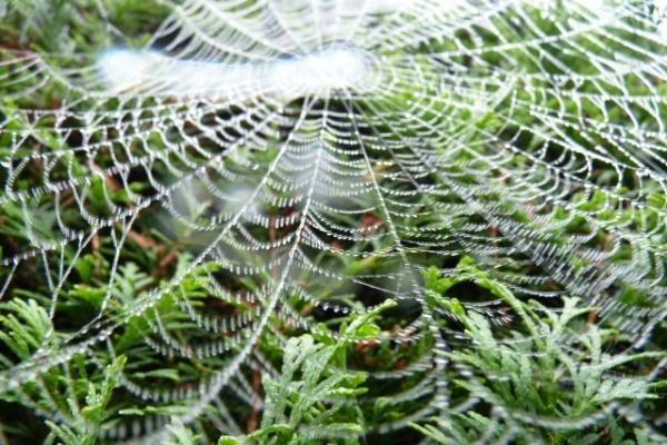 Unikalų skambesį suteikia stygos iš voratinklių