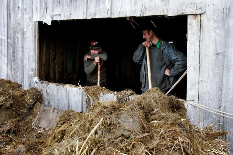 Ūkininkas nubaustas už netinkamą mėšlo ir srutų tvarkymą