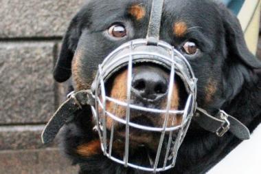 Vilniuje šuo apkandžiojo vyrą