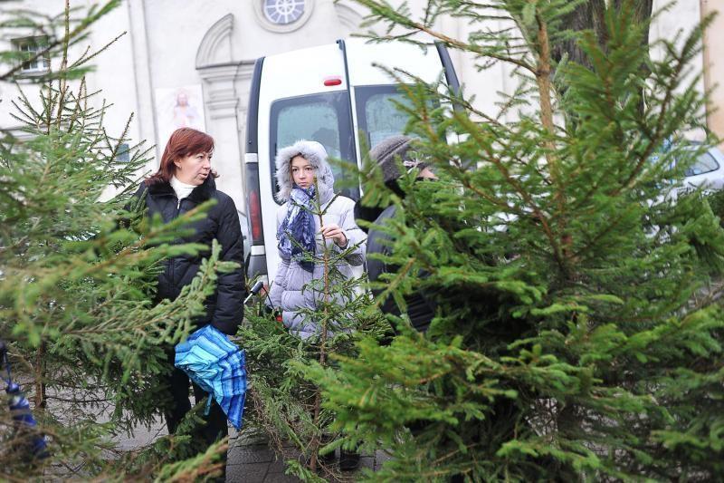 Nemokamos eglutės Kaune – sugadinta kalėdinė nuotaika