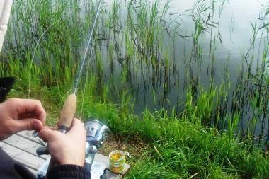 Kauno mariose žuvys nedūsta