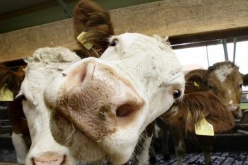 Ūkininkų dalintas pienas – šviežias ir saugus
