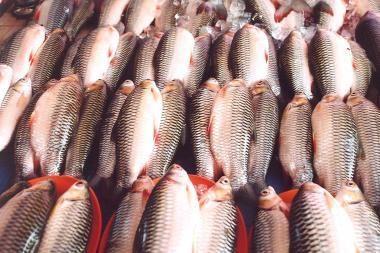 "Žvejai Vilniuje atgaivins ""Žuvies dieną"""