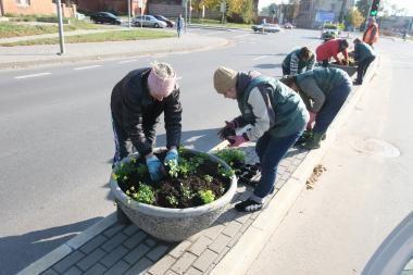 Rudenį sodintos našlaitės nušalo