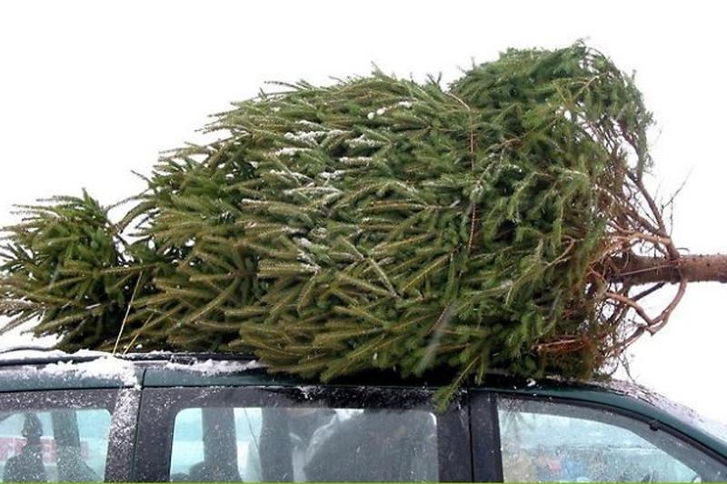 Kalėdinių eglučių prekyba: ką rinktis - gyvą, ar dirbtinę?