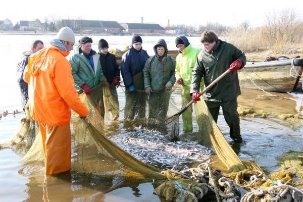 Žvejyba Rusnėje: tinkluose – tonos stintų