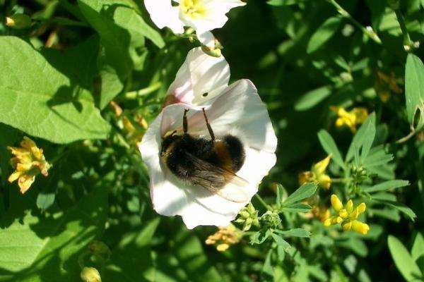 Grybautoją pražudė bitės