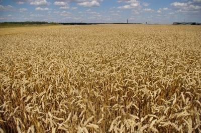 Lietuva pasisako už grūdų muitus