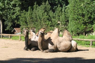 Zoologijos sodas švenčia 70-metį (nuotr.)
