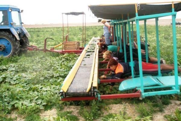 Kėdainių rajone traktoriaus priekaba pervažiavo septynmetį