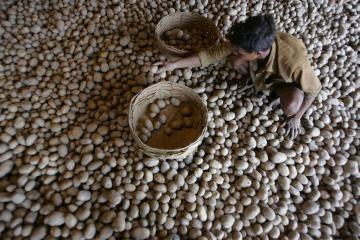 Pasaulio šalys šiemet importuos maisto už trilijoną dolerių