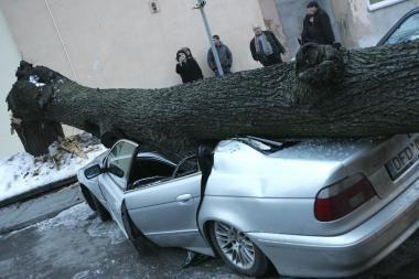 Kauno centre nuvirtęs medis suknežino automobilius