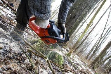 Vilniaus miškininkai tapo Seimo problema