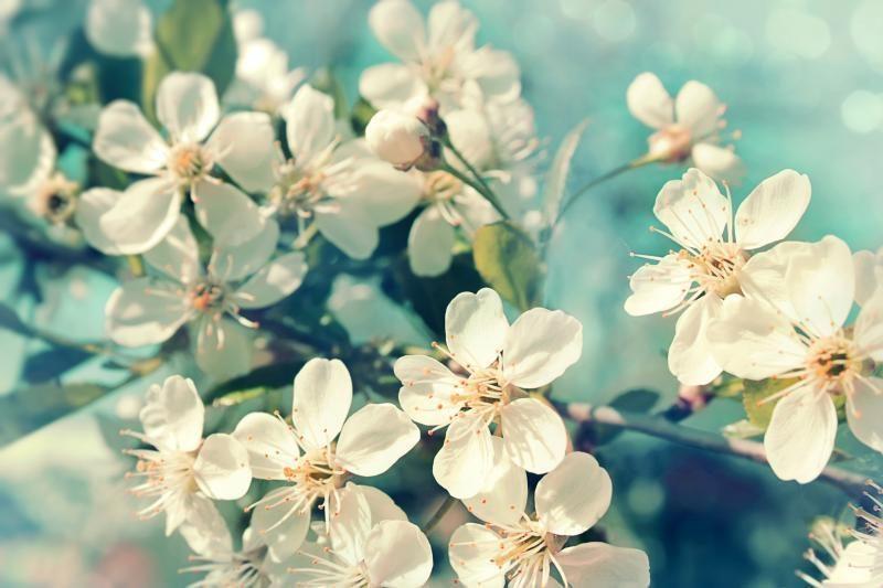 Pavasarinės J.Ramanauskienės            eilės